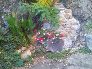 A garden outside Penzion Marjánka