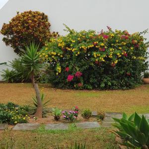 Jardín al aire libre en IDP204- APARTAMENTO DE 2 DORMITORIOS NO INGLESES