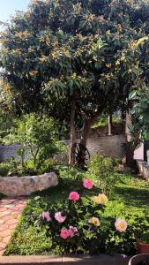 A garden outside Apartments Miljas 2