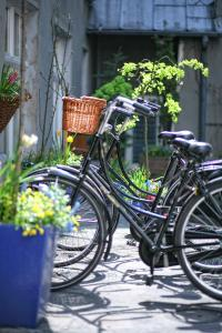 Biking at or in the surroundings of Antique Apartments Plac Szczepański