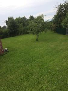 A garden outside Ferienhaus Hertha