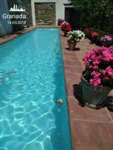 The swimming pool at or near Apartamentos Carmen de Ramilla