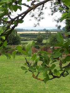 A garden outside Cosy Cottage Kilkenny Ireland