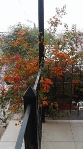 Un balcón o terraza en WAYRA TAKI (Canción del Viento)