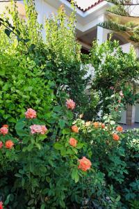A garden outside Venus