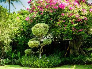 A garden outside Villa Anggrek
