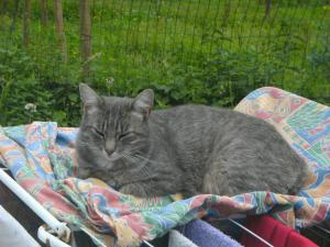 Pet or pets staying with guests at Ferme Lenfant Rez