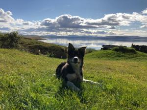 Pet or pets staying with guests at Bessastaðir Guesthouse