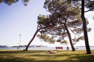 Giardino di Venezia Biennale Bianco & Rosso
