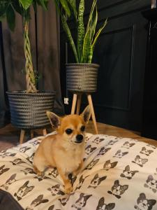 Pet or pets staying with guests at Apartament 14