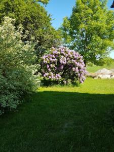Een tuin van Skovlund Apartments