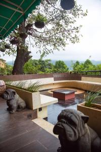 Pet or pets staying with guests at Lavasa Luxury Deck Apartment with View