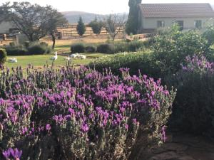 A garden outside Mount High Luxury Country Lodge