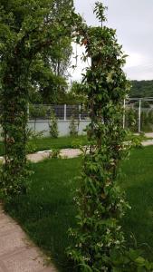 A garden outside Alreem Vella