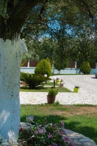 A garden outside Eleana Studios