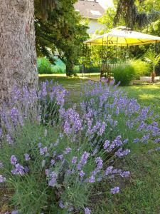 Ogród w obiekcie Éden Villa Családi Apartmanház