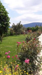 A garden outside Karantonis House