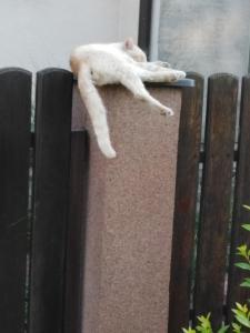 Zvieratá v apartmáne alebo blízkom okolí