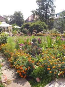 A garden outside Ferienwohnungen Wilhelm