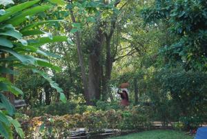 A garden outside Laguna Anjuna