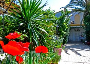 A garden outside Villa Elena