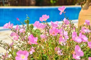 The swimming pool at or near Kapases Studios & Apartments