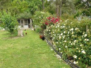 A garden outside Camawald Coonawarra Cottage B&B