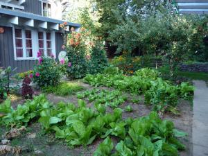Ein Garten an der Unterkunft Ferienhaus Gartenlust