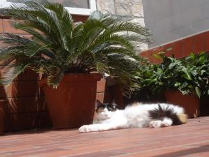 Pet or pets staying with guests at Heart of the City Apartments