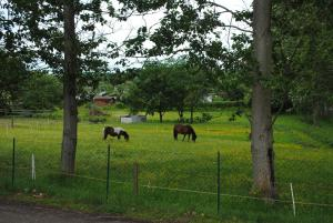 Zvířata v prázdninového domu nebo okolí