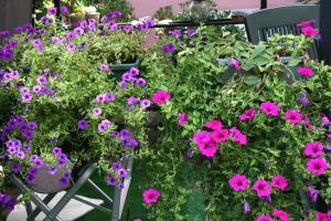 Een tuin van Casa Flora