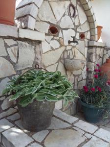 Αίθριο ή υπαίθριος χώρος στο The Green Home