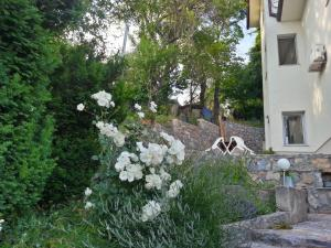 Сад в Maslov Apartments