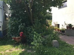 Ein Garten an der Unterkunft Hof Uhleck am Königsstuhl