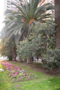 Jardín al aire libre en Departamento en Santiago Centro