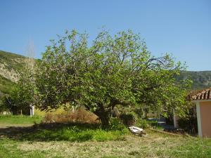 A garden outside Pantelios Village