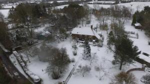 Little Mistletoe during the winter