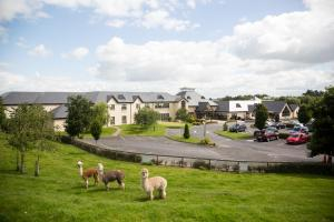 Airbnb | Athy - Vacation Rentals & Places to Stay - County