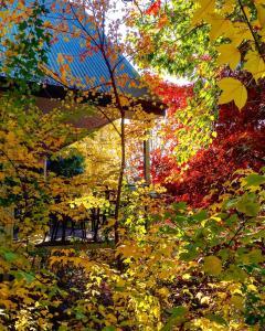 A garden outside Birches Luxury Spa Chalets