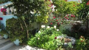 A garden outside G. Sandalis Hotel