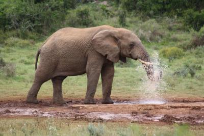 大象的脚印旅舍