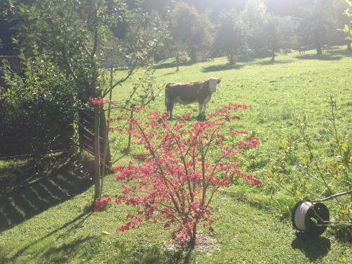 Ein Garten an der Unterkunft Appartment Shelley