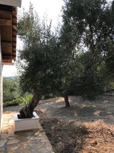 Een tuin van Ferienhaus Olive Garden