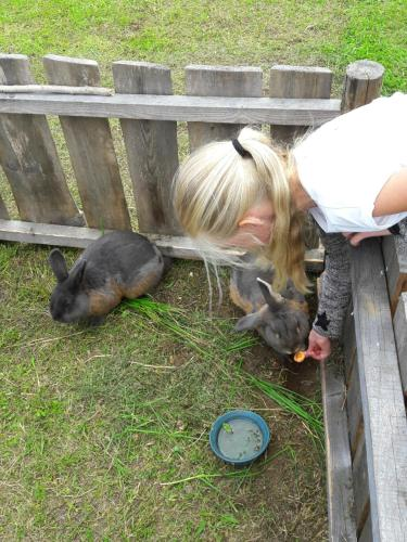 Majutusasutuse Kauksi Puhkemaja külastajatega peatuv lemmikloom või lemmikloomad