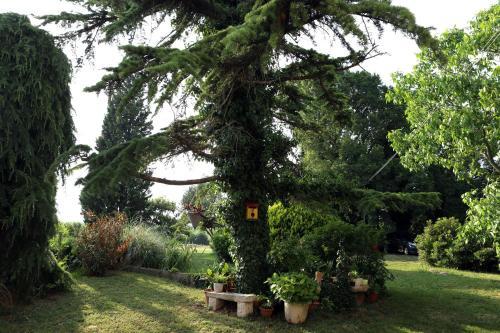 Vonkajšia záhrada v ubytovaní Garden