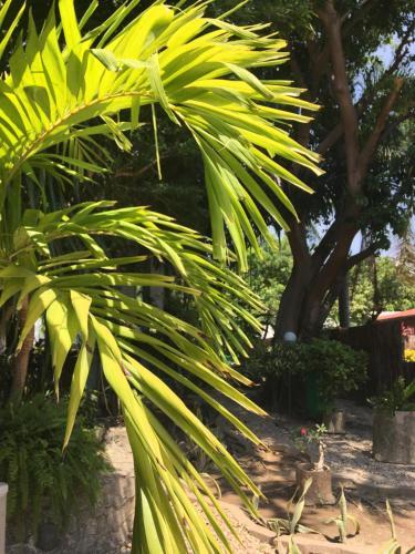 A garden outside The Gardens Residence