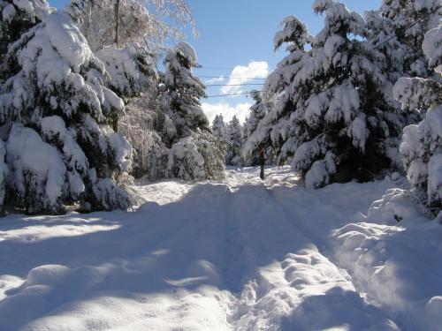 """DAT """"Lo de Bianca"""" durante el invierno"""