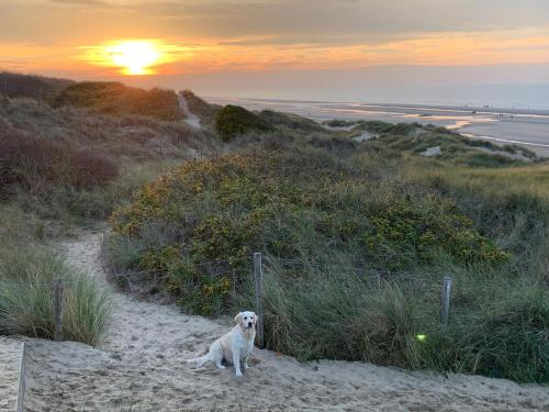 Pet or pets staying with guests at De Haan - Apartment Silverbeach