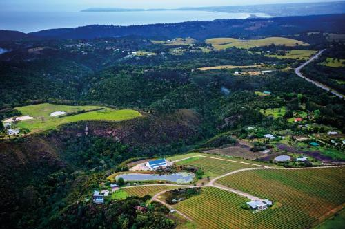 A bird's-eye view of Bramon Wine Estate