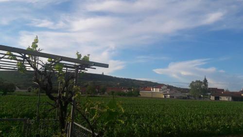 Wachau | Rohrendorf bei Krems | Landhaus Weinblick